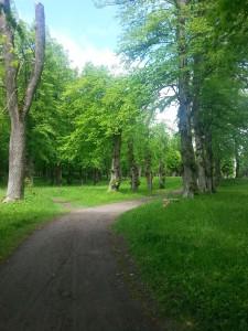 Vägen till Friskhus